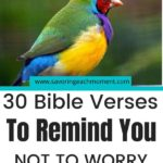 30 Bible Verses to Remind You Not to Worry