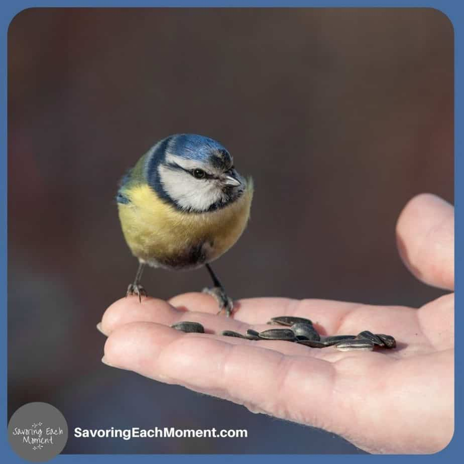 bird on hand with seeds - how to trust God's plan
