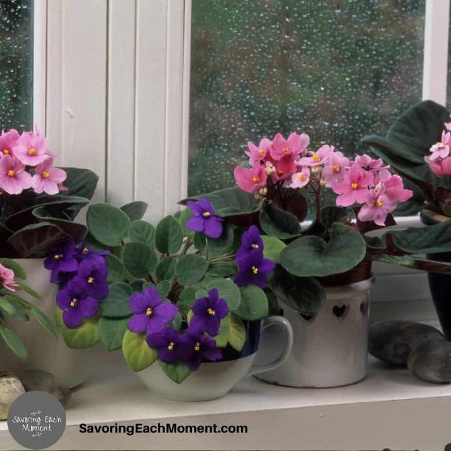 potted violets on a windowsill like the ones in the stories of giving your worries to God